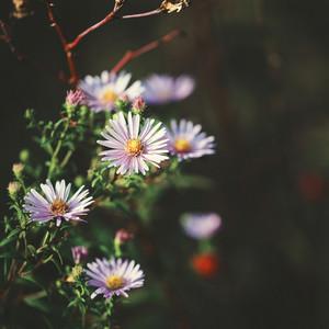 vintage flowers on dark background
