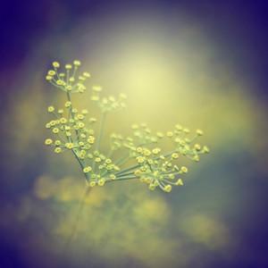 Vintage meadow flowers. Macro