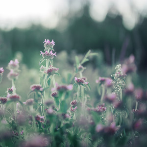 vintage meadow little soft pink flowers in field. Nature fresh background