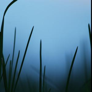 vintage morning grass in fog. Nature