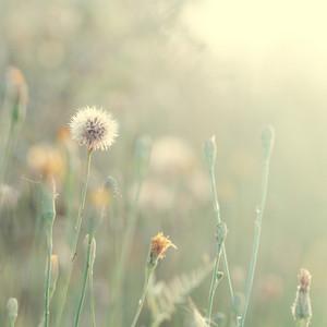 vintage nature flower in nature. Outdoor fresh autumn macro closeup photo