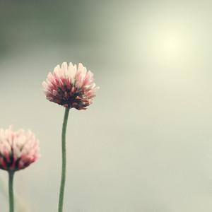 vintage nature flowers background