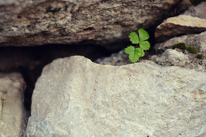 vintage photo of green leaves in stones