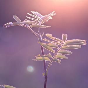 Vintage plant at sunrise in forest