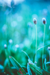 Vintage plants. Green grass in field. Nature outdoor