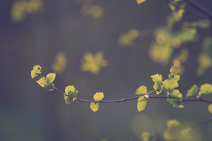 vintage plants. Nature spring