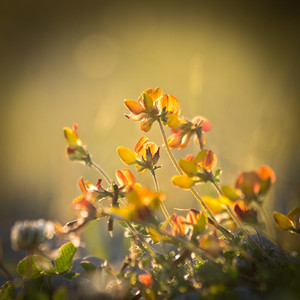 Vintage spring flowers in field at sunshine