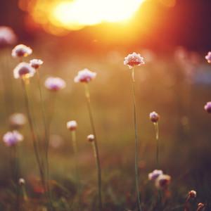 Vintage spring flowers. Nature sunshine in field