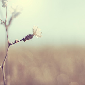 vintage spring vintage flower. Nature