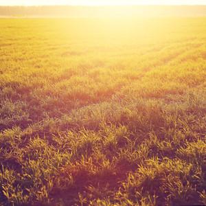 vintage sunny field grass background