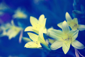 Vintage wild lily flowers natural background