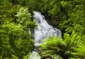 Waterfall in Victoria, Australia