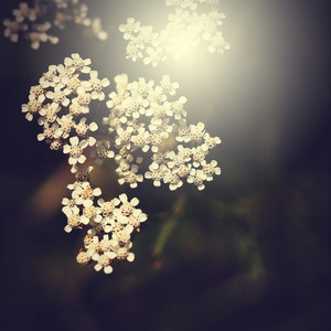 White beautiful vintage flowers background