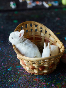 White Easter bunny looking out of basket