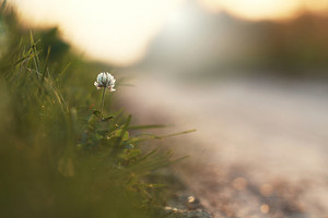 white flower by roadside. Nature outdoor autumn photo