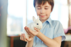 White fluffy rabbit held by happy kid