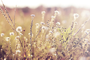 white meadow soft flowers. Vintage sunny autumn field natural background