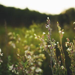 wild flowers on green field background