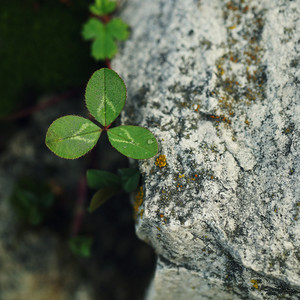wild small green plant in stone of mountain on nature background