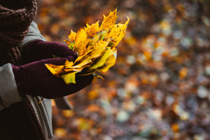 Women holds bouquet of autumn yellow maple leaves in her gloved hands. Ground covered with orange leaves in background