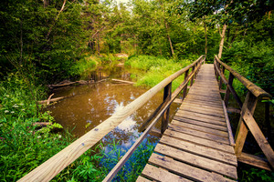 Wooden bridge over brook in the forest