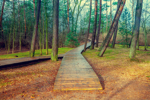 Wooden pathway in the forest after rain