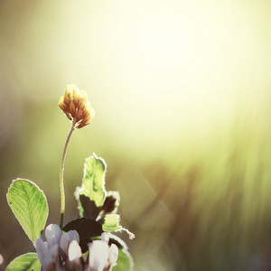 yellow flower at morning vintage background