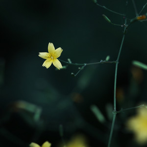 yellow flower in morning dark background