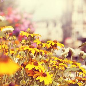 yellow flowers. Outdoor