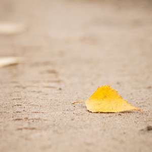 Yellow leave in autumn on road. Nature