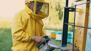 Young beekeeper man smoking bees away from beehive in apiary