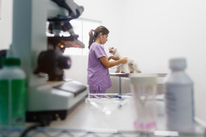 Young latina woman working as veterinary, vet during visit. Animal doctor visiting ill pet in clinic and checking dog heartbeat. People, job, profession and animal care