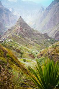 Yucca plants and sugar cane on trekking path way towards mountain peak of Xo-xo valley. Santo Antao island, Cape Verde