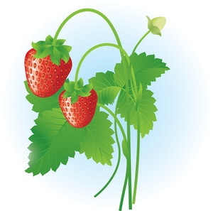 Strawberry. Vector.