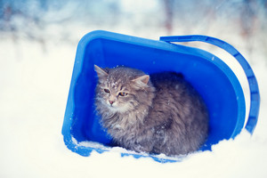 Stray cat taking cover from snowstorm in a bucket