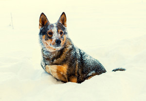 Stray dog covered with snow outdoors in winter