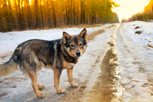 Stray dog staying on the icy dirt road