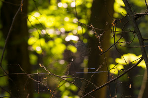 Strings of a spider\'s web in back light in forest. summertime forest detail