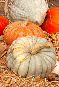 Stripped Pumpkins