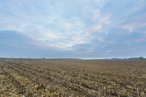 Stubble field after harvested corn. Autumnal or early winter landscape with calm colors.