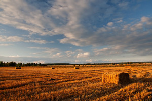 Stubble field in sunset light with straw bales