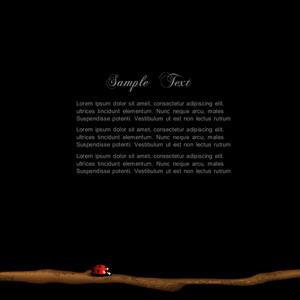 Stylish Black Background With Ladybird