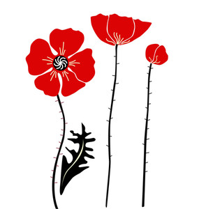 Stylish Red And Black Poppies On White Background