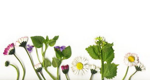 Summer Flowers Border Isolated On White Background-