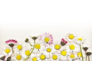 Summer Flowers Border Isolated On White Background