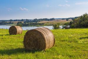 Summer meadow landscape. Green meadow