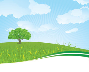 Summer Meadow. Vector Background/