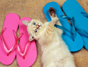 Summer scene. Little kitten wearing flip flops sandals