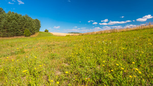 Summertime meadow under blue sky. Tranquil countryside at warm and sunny day. Polish rural landscape