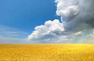 Sun rays flooding wheat field with light